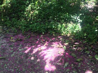 Лилав килим от цветовете на незнайно за мен растение, растлан на земята