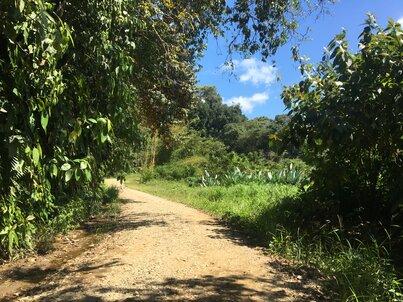 Каменен черен път на фона на зелена джунгла и синьо небе